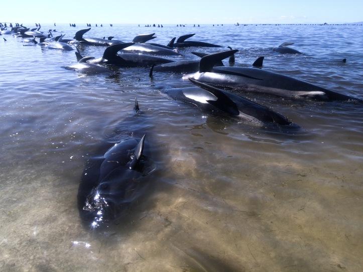 deadwhales.jpg